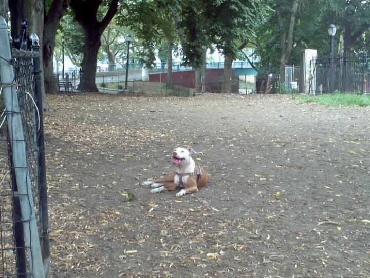 Dog Park North Park Pittsburgh