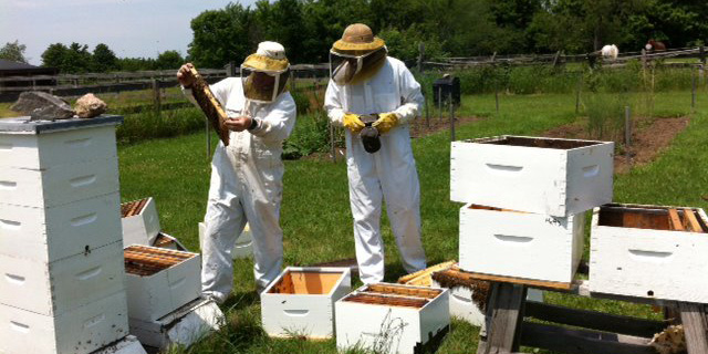 The Awesome Foundation : Ottawa Community Beekeepers
